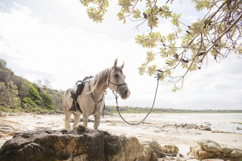 Horse Riding Australian Beaches NSW - Horse Treks Australia