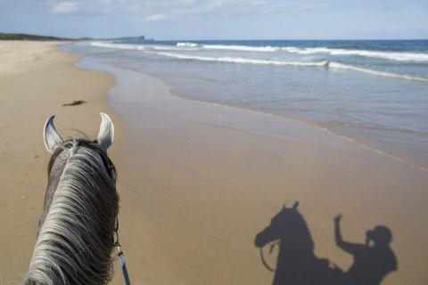 Horse Riding Australia Endless Pacific Ocean Beach NSW - Horsetreks Holidays