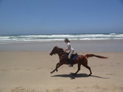 Riding Arabian Horse On NSW Australian Beach