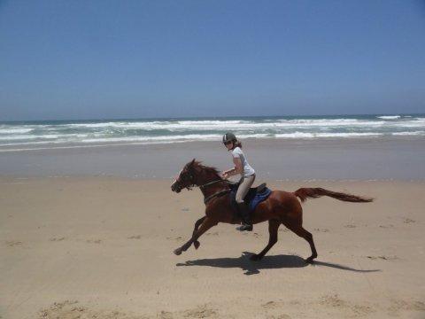 Riding Arabian Horse On NSW Australian Beach