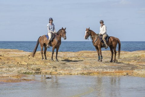 Australian Horse Holidays NSW Mid North Coast On Arabian Horses