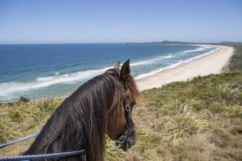 Horse Riding To The Headland NSW - Beach Horse Treks Australia