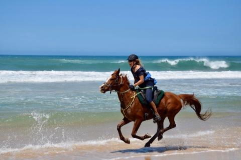 Beach Gallop Horse Riding Adventures