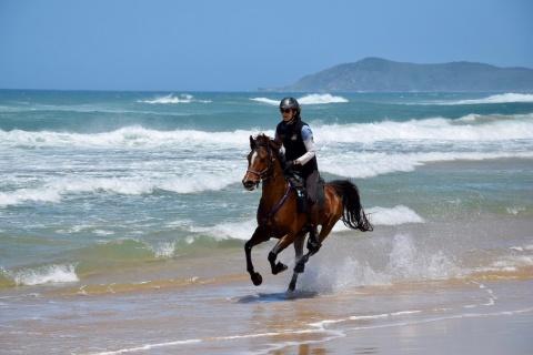 Horse Riding On The Beach Australia NSW