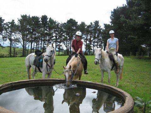 Horse Riding Tours At Comboyne's Green Pastures, Port Macquarie Hinterland, NSW Australia