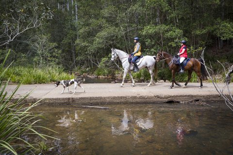 Swans Crossing Horseriding Kerewong State Forest NSW Australia