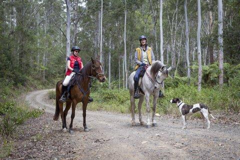 Australian Horse Riding Holiday - Bush Horse Treks NSW North Coast