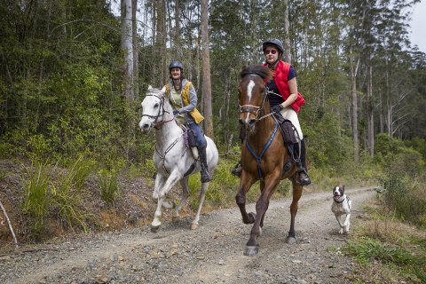 Australian Bush Trails Horse Riding Treks Gallop NSW State Forest Mid North Coast