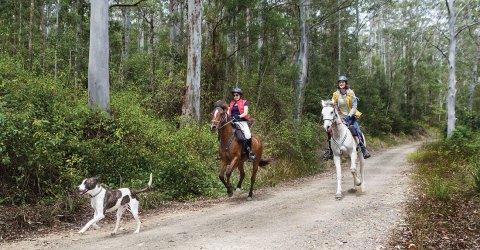 Horse Riding Holidays Bush Treks Australia NSW North Coast
