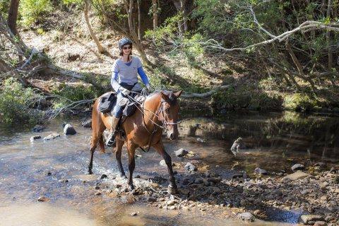 Horse Riding Adventure Tours Horse Treks Australia NSW North Coast