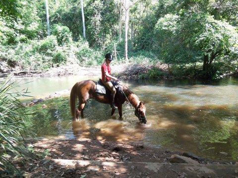 Creek Horse Riding NSW Australia  Horse Treks Mid North Coast Near Port Macquarie