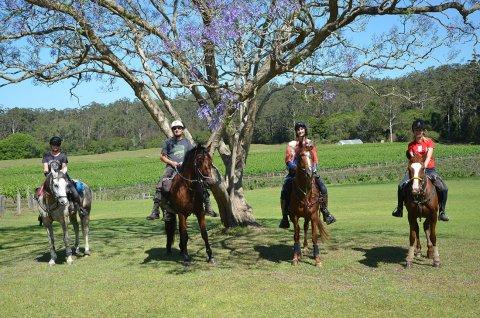 Horse Riding Holiday Group At Bago Vineyards, Port Macquarie Hinterland NSW Australia