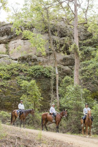 Mountain Scenery Horse Treks Australia NSW North Coast Hinterland