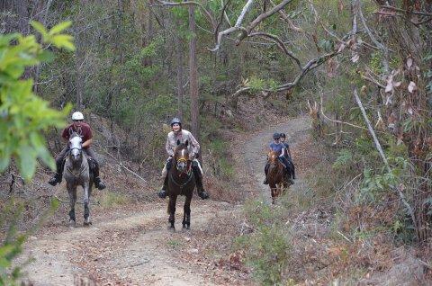 Comboyne Mountain, Horse Treks Australia NSW Adventure Tours