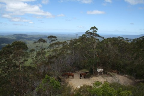 View On Top Of Comboyne Mountain - Horse Treks Australia NSW Adventure Tours
