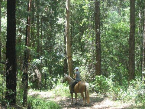 Horse Riding Tours Remote Bush Trails Mid North Coast NSW Australia
