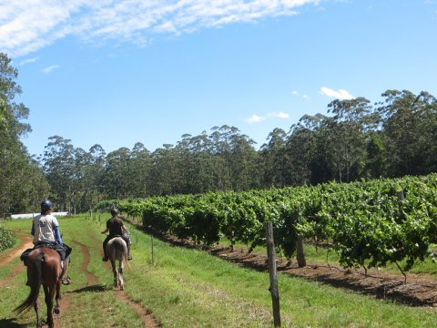 Australian NSW Winery Horse Riding Tour