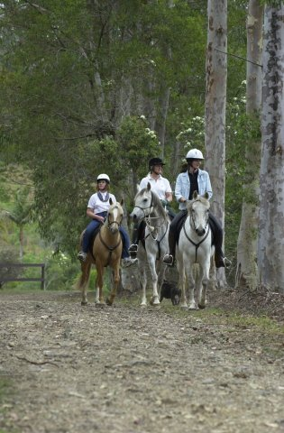 Australian Horse Riding Holidays Southern Cross Horse Treks NSW