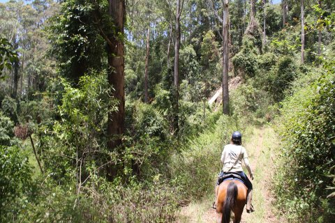 Bush Trail Riding Advanced Riders Tours Horse Treks Australia