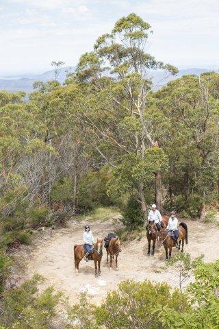 Comboyne Mountain Horse Riding Holidays NSW Australia