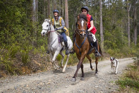 Horse Riding Gallop Through Australian NSW North Coast Forests
