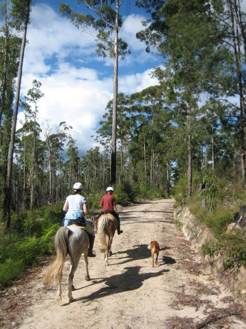Horse Trails Australian Bush Port Macquarie Hinterland NSW