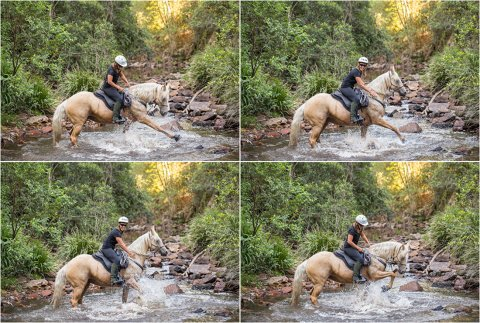 Hinterland Horse Riding Creek Australian Palomino On Horse Trek