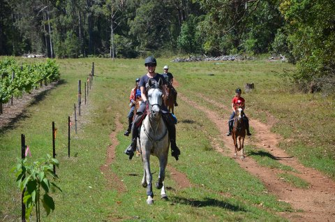 Horse Riding Tour Port Macquarie Hinterland From Lorne Valley To Bago Vineyards NSW Australia