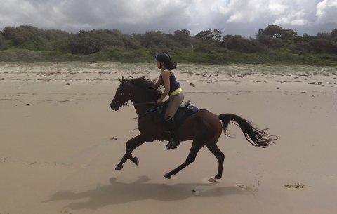 Kuta - Horse Riding Port Macquarie Beaches NSW - Horse Treks Australia