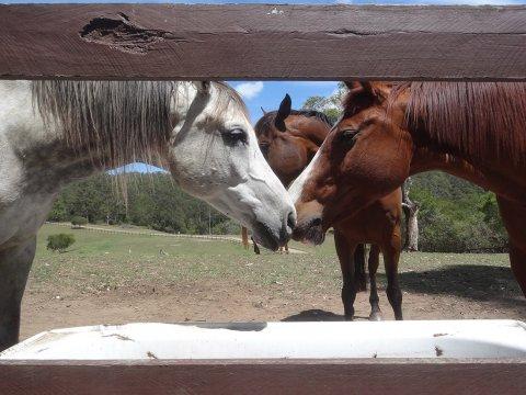 Kerewong Horse Riding Farm NSW Country Trail Riding Holidays Australia
