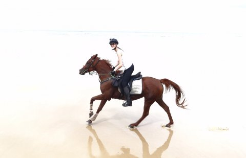 Aliya - Horse Riding Holidays Australia Port Macquarie Beaches NSW