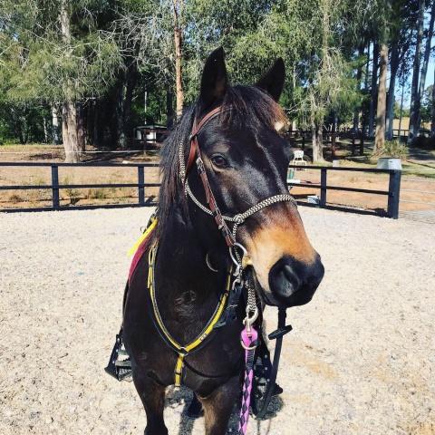 Australian Brumby Horse Riding Holiday Australia
