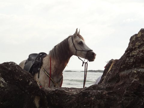 Jimmy - Horse Riding Adventures Holidays East Coast Beaches NSW Australia