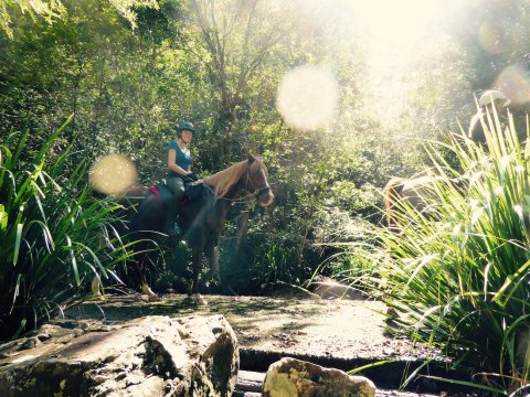 NSW Mid North Coast Forest Horse Riding
