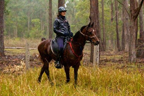 Horse Endurance Riding Tours NSW Australia