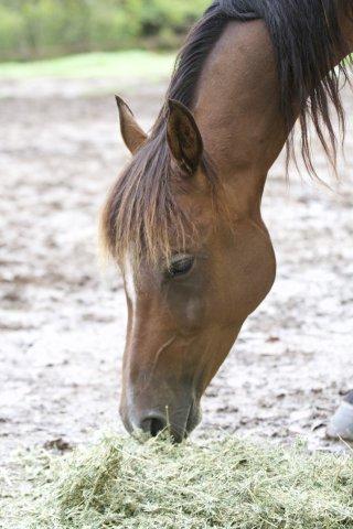 Kuta - Well Cared For Kerewong Trail Horses