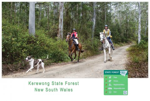 Horse Riding Tour Trails Kerewong State Forest NSW North Coast