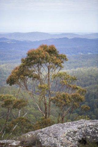 Horseriding Tours Australian Mountain Ranges
