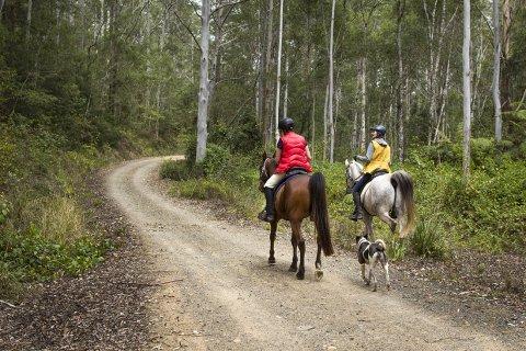 Horse Riding Australian Bush Trail NSW State Forests Australia
