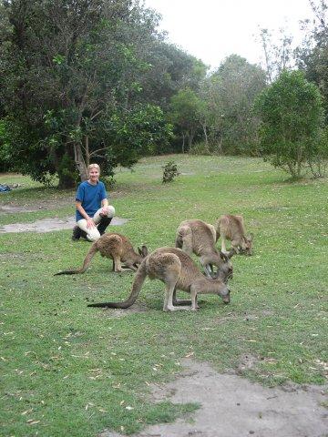 Australian Wildlife - Meeting Kangaroos During Horse Beach Ride On NSW Mid North Coast