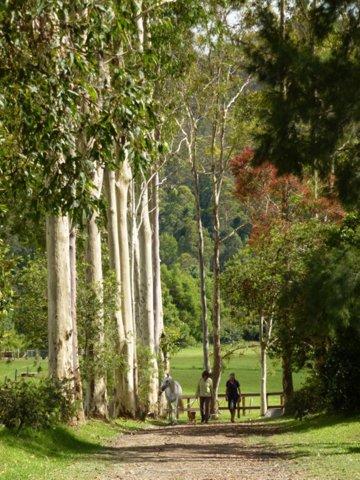 Kerewong Horse Riding Holidays Horse Treks Adventure Tours NSW Australia