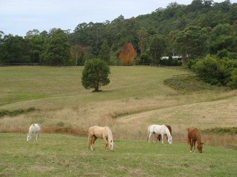 Kerewong Horse Trekking Tours NSW Country Trail Riding Holidays Australia
