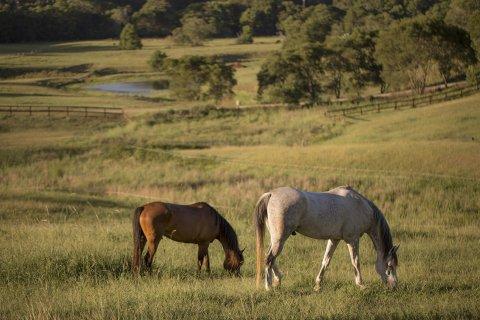 Southern Cross Horse Treks Australia - Kerewong Horse Farm NSW