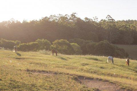 Kerewong Horse Riding Holiday Farm NSW Southern Cross Horse Treks Australia
