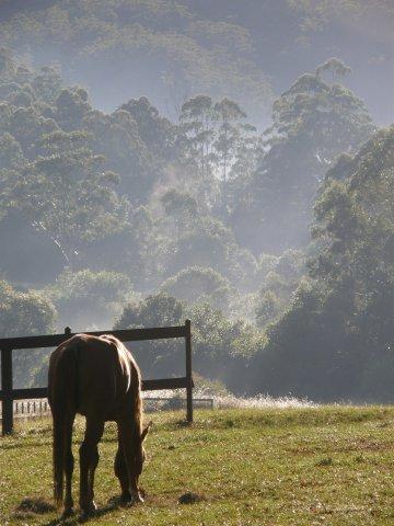 Horse Treks Australia - Misty Hinterland Bush Farm Horse Riding Holiday NSW