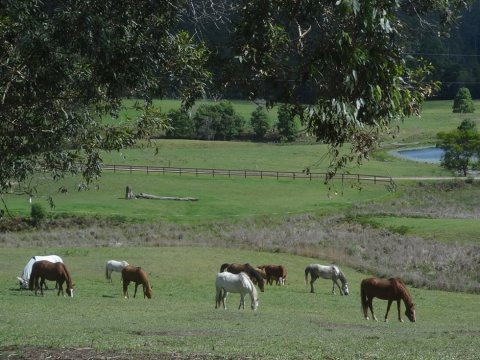 Well Cared For Trekking Horses Enjoy Acres Of Paddocks NSW Port Macquarie Riding Holidays