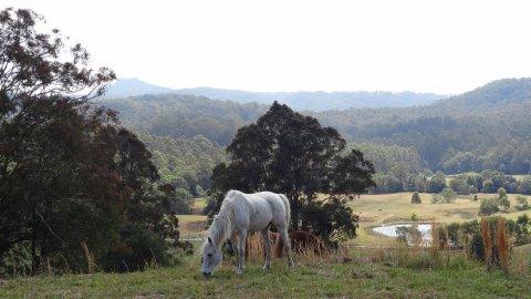 Endurance Arabian Horse Riding Adventures Holiday Farm NSW Australia