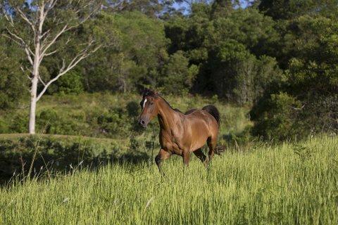 Southern Cross Horse Treks Australia - Kerewong Horse Riding Farm NSW