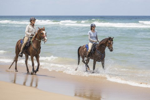 Horse Riding Holidays Experienced Riders Beaches NSW - Horse Treks Australia