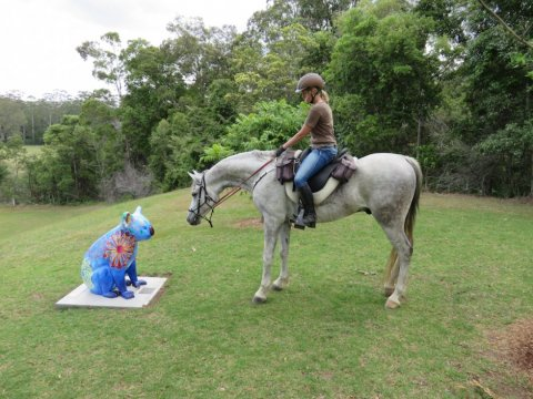 Jimmy Meets The Blue Koala At Bago Vineyards On Winery Horse Ride Tour
